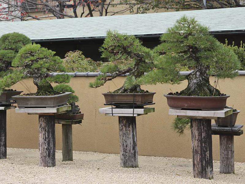 Où voir des bonsaï au Japon