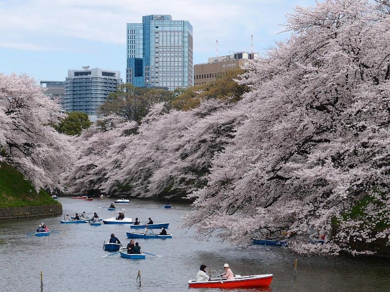 Quelle est la saison idéale pour un voyage au Japon